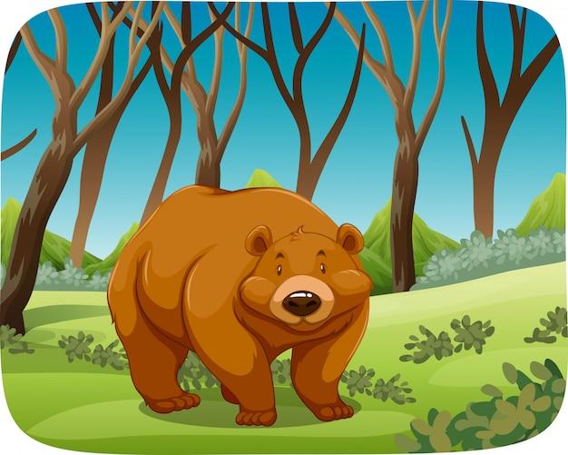 Orso bruno nella scena della natura