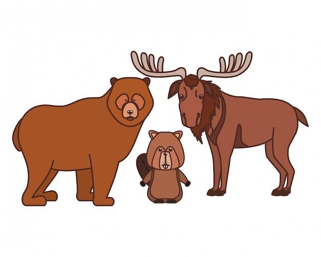 Orso del castoro e animale delle alci del canada