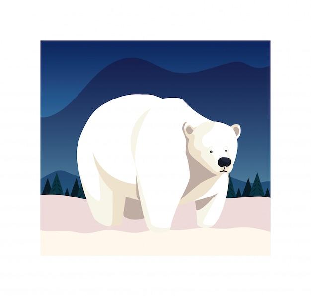 Orso polare al polo nord
