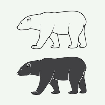 Orso polare artico bianco