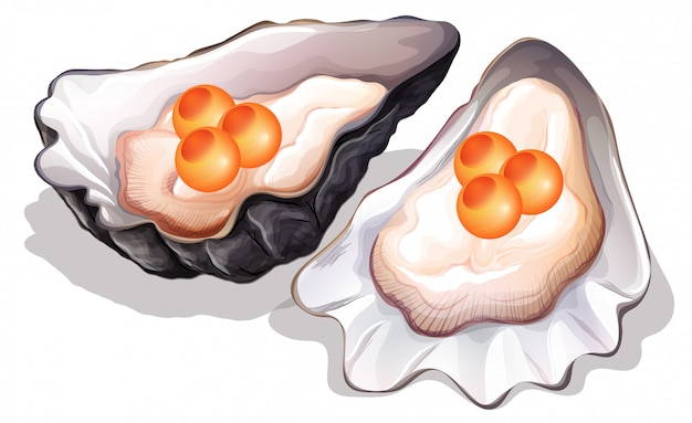 Ostrica su sfondo bianco