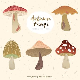 Pacchetto carino di funghi moderni