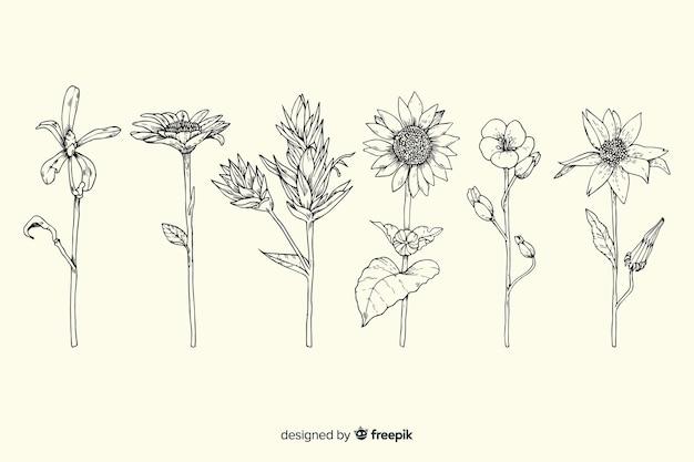 Pacchetto di fiori di botanica vintage disegnato a mano realistico