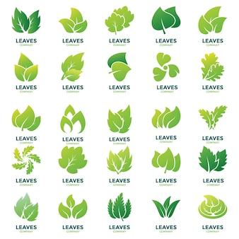 Pacchetto disegni logo foglie