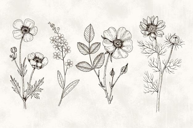 Pacchetto realistico di erbe e fiori selvatici disegnati a mano