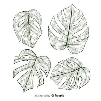 Pack di foglie di monstera incolore
