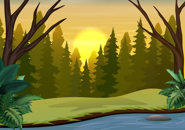 Paesaggio della foresta sulla scena del tramonto con alberi secchi