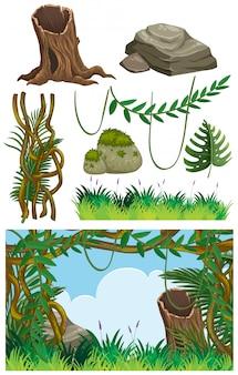 Paesaggio della natura della foresta con erba e la vite
