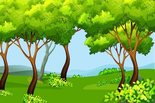 Paesaggio della natura foresta verde