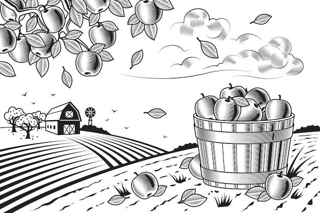 Paesaggio della raccolta della mela in bianco e nero