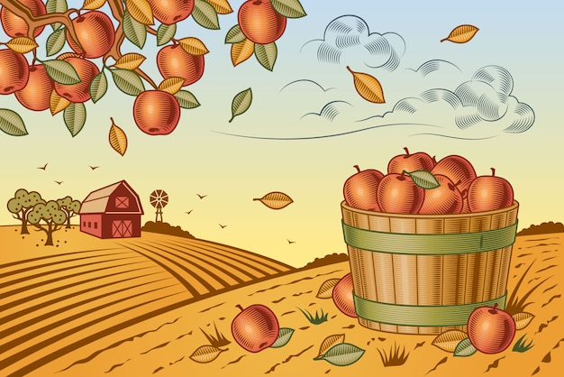 Paesaggio della raccolta delle mele