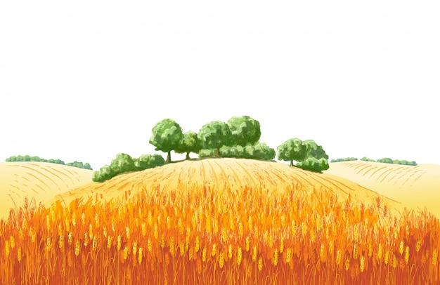 Paesaggio estivo rurale un campo di grano maturo sulle colline