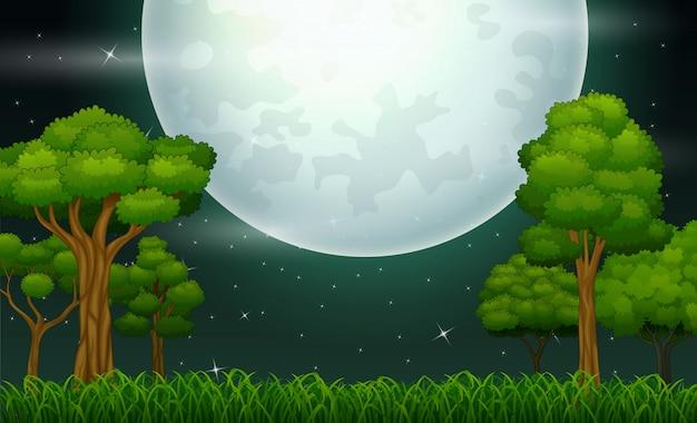 Paesaggio forestale di notte con una luna piena