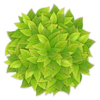 Palla di foglie verdi. illustrazione vettoriale dettagliata realistica.