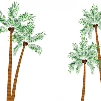 Palma con la noce di cocco nel fondo bianco