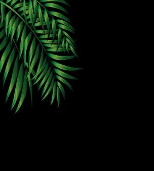 Palma verde naturale tropicale. illustrazione