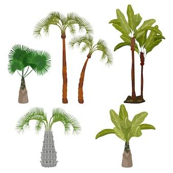 Palme. beach california piante brasile hawaii giardino palme foglia collezione di cartoni animati. tropico della pianta verde, illustrazione della flora tropicale delle hawaii