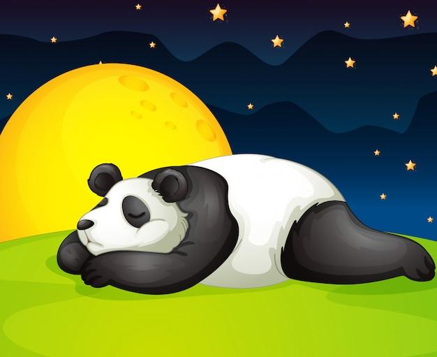 Panda che riposa nella notte