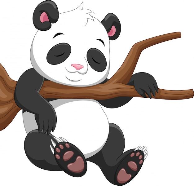 Panda sveglio che dorme su un ramo