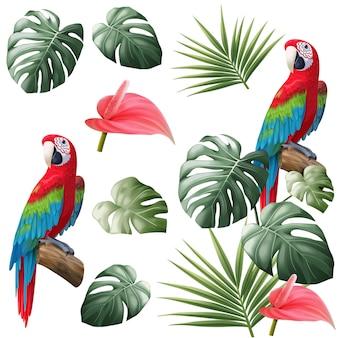 Pappagallo e permesso tropicale isolati
