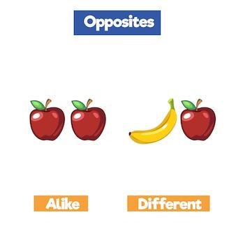Parola opposta con disegni animati, vocabolario inglese, allo stesso modo, diverso