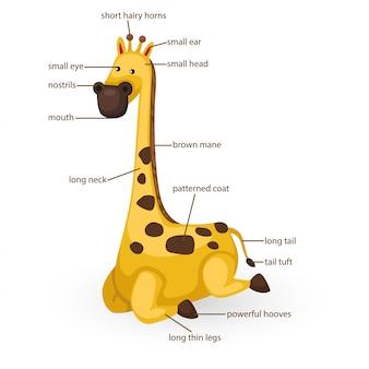 Parte del vocabolario della giraffa del vettore del corpo