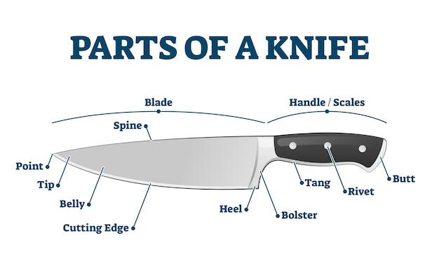 Parti del coltello da cucina con descrizione della struttura etichettata. schema educativo con strumento di taglio e tritare. attrezzatura da chef per la preparazione dei cibi. grafico lama, manico e scale.