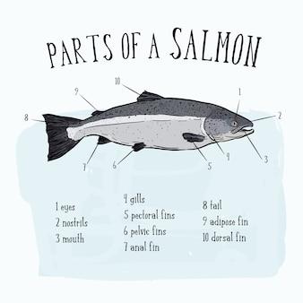 Parti di pesce salmone