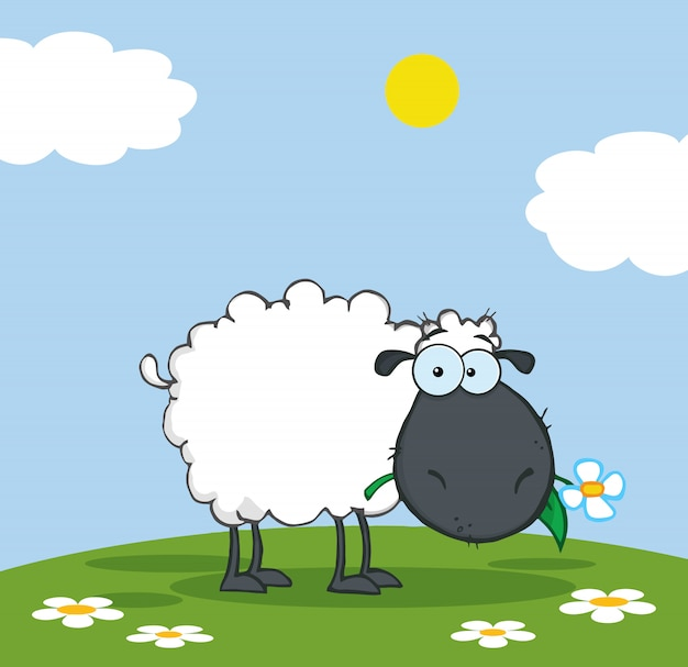 Pecore nere che mangiano un fiore su un prato