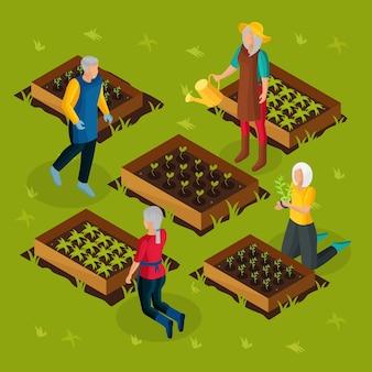 Pensionati isometrici che lavorano nel modello di giardino con pensionati che coltivano e coltivano diverse piante orticole