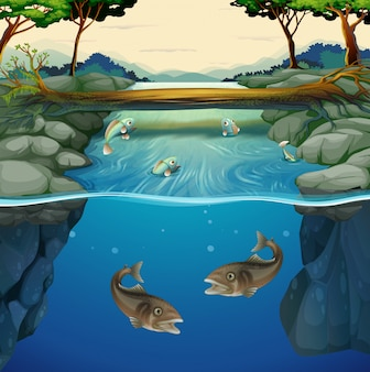Pesce che nuota nel fiume