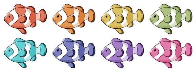 Pesce pagliaccio in molti colori