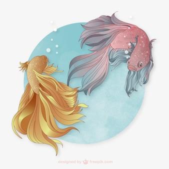 Pesci di combattimento siamese
