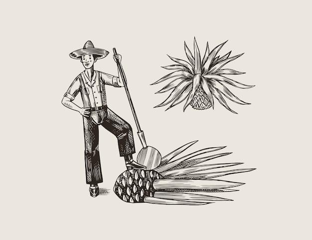 Pianta di agave per cucinare la tequila. frutta e contadino e raccolto. poster o banner retrò. schizzo vintage disegnato a mano inciso. stile xilografia. illustrazione.