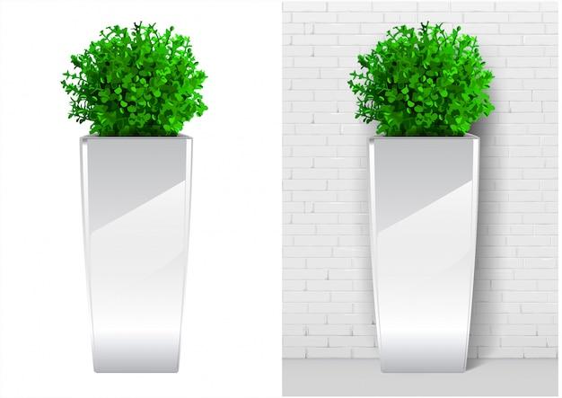 Pianta di bush in vaso bianco moderno