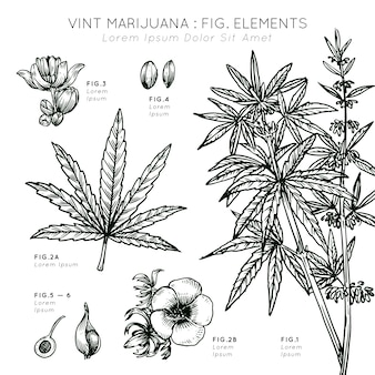 Pianta di elementi di marijuana vint disegnata a mano