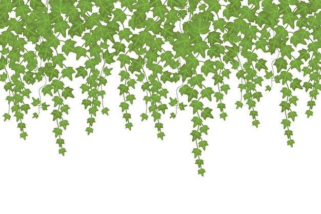 Pianta rampicante della parete verde dell'edera che pende da sopra. decorazione del giardino