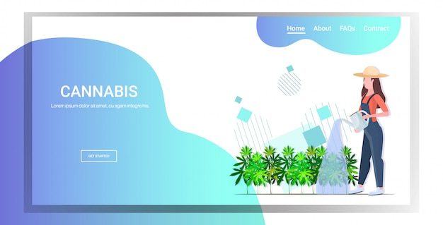 Piantagione di canapa industriale irrigazione cannabis donna contadina