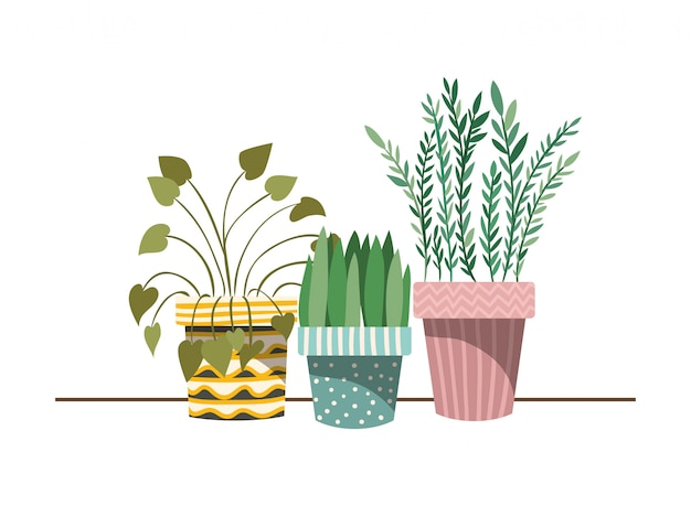 Piante d'appartamento con vaso