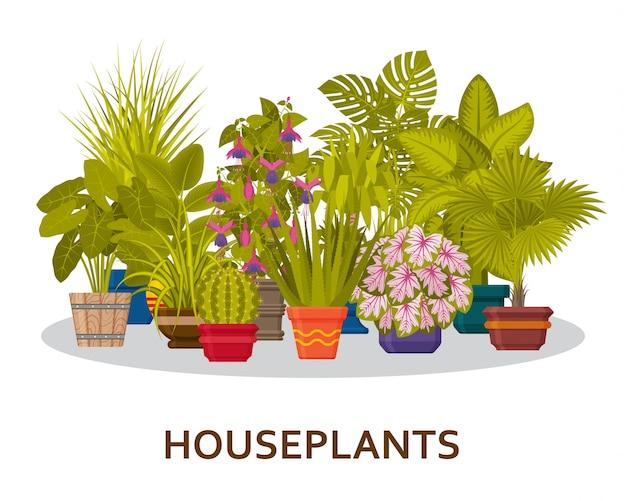 Piante d'appartamento decorative nel fondo dei vasi. fiorista al coperto di palme e vasi di fiori interni. illustrazione