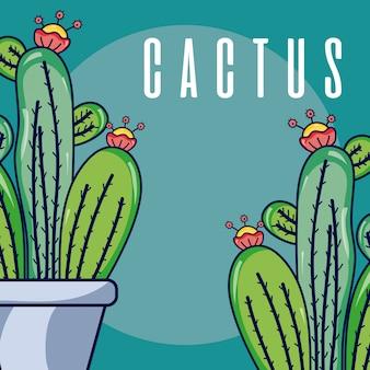 Piante di casa di cactus
