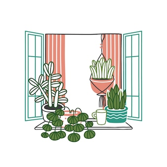 Piante e fiori della casa in vasi in finestra aperta