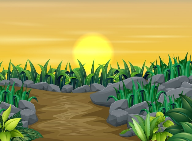 Piante verdi con paesaggio al tramonto