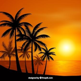 Piatto tramonto sfondo con palme