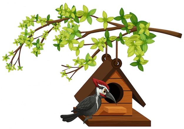 Picchio che vive nella casetta per gli uccelli