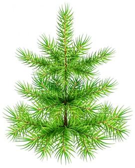 Piccolo albero di abete verde del pino di natale