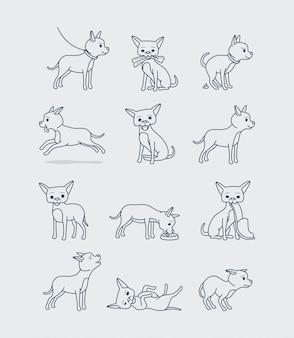 Piccolo cane della chihuahua nelle pose differenti