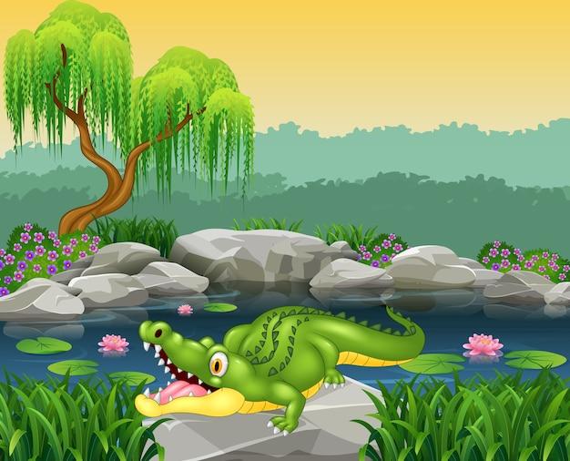 Piccolo coccodrillo sveglio che posa sulla roccia
