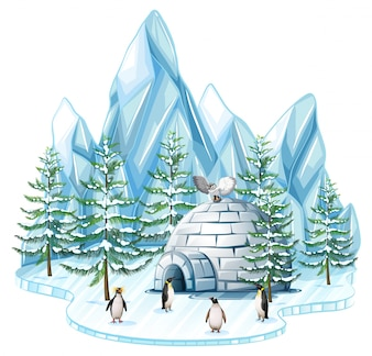 Pinguini e gufo dall'iglo
