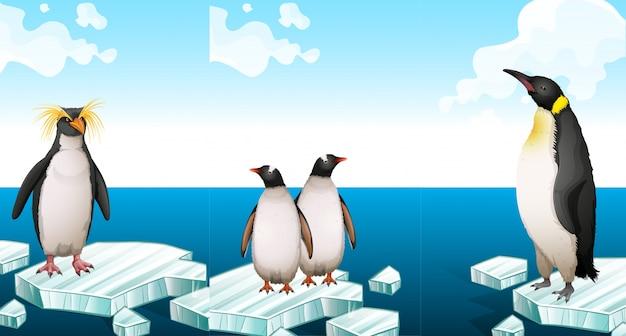 Pinguini in piedi sull'iceberg